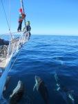 18. Delfiner på besök