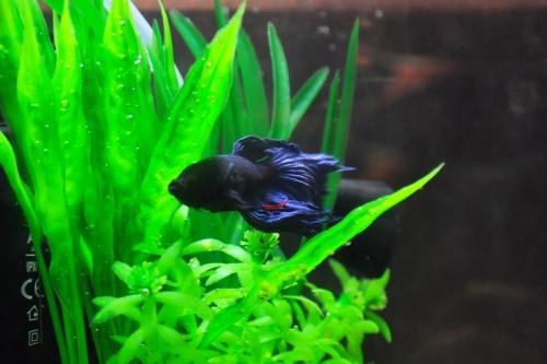 Ja, så här ser han ut. Ottos skeppsfisk.
