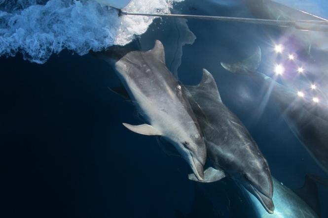 7. Bild på resesällskapet: Delfiner är bästa sällskapet till sjöss