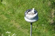 Gatlykta på Nidingen: Här försöker man göra det bekvämt för fåglarna istället för tvärtom.